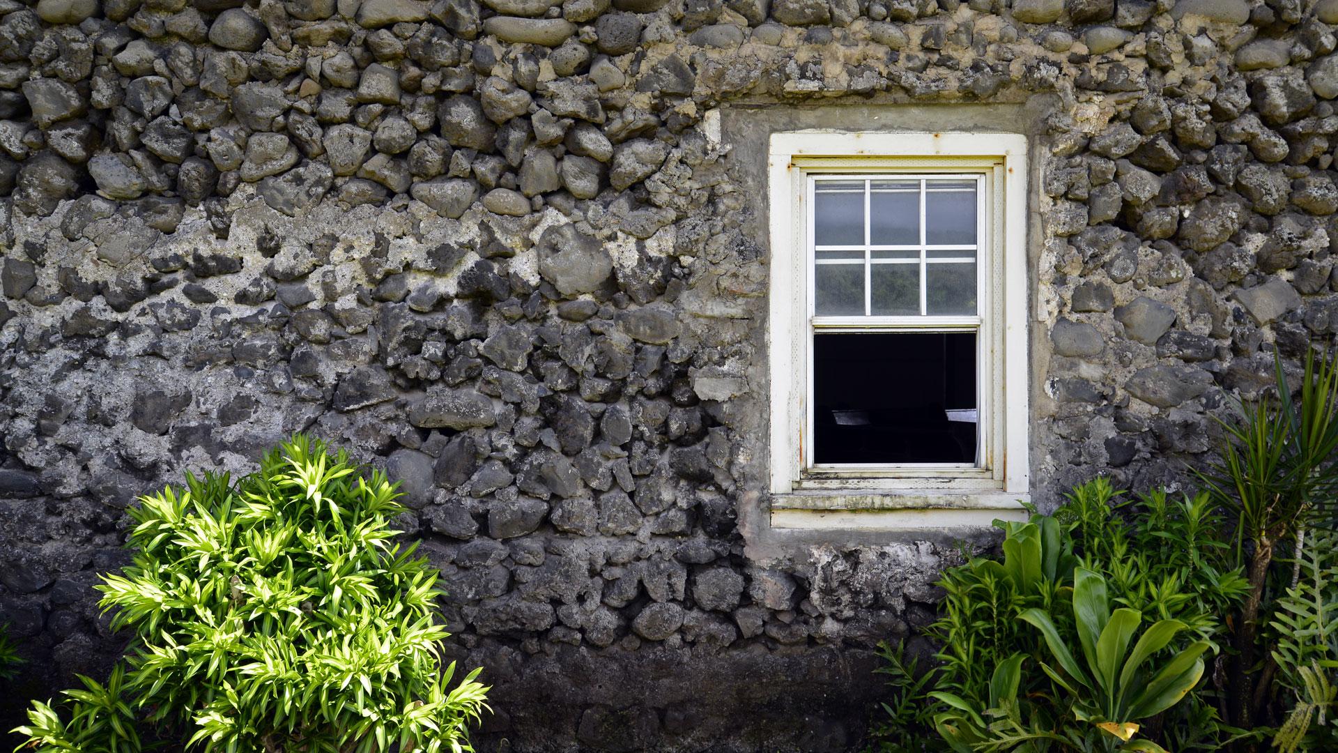 Window-Wall-Web